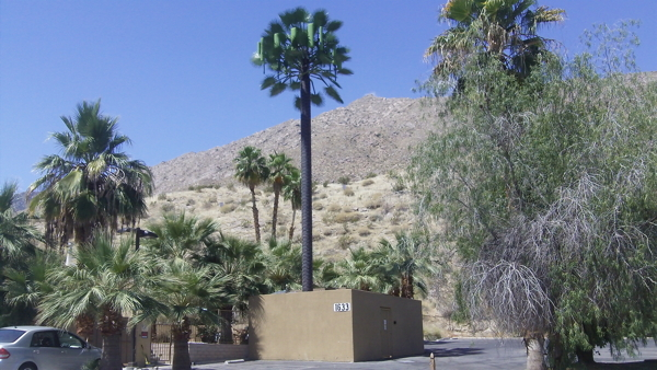 powerful microwave cell tower disguised as a palm tree